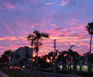 palm trees, city, and pink image