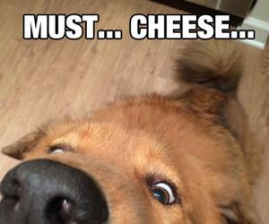 dog, food, and cute image