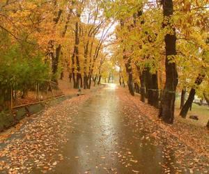autumn, beauty, and Georgia image