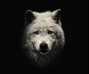 tumblr, wolf, and beautiful image