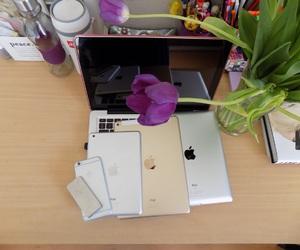 apple, ipod, and tulips image