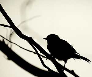 bird, black, and black and white image