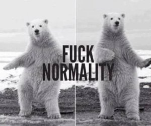 bear, black and white, and funny image