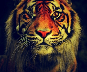 tiger and animal image