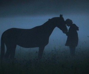 horse, night, and blue image