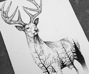 animal, art, and draw image
