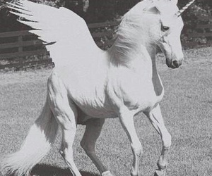 black, blackandwhite, and horse image