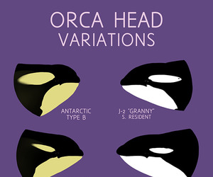 animals and orca image