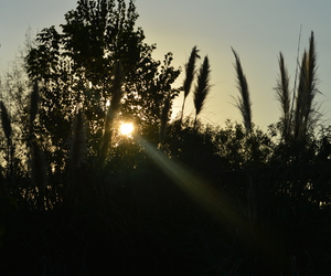 sun, afternoon, and nature image