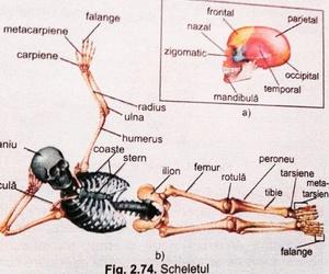 anatomy, bones, and medicine image