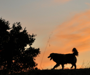 dog, nature, and outdoors image