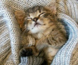 animals, cozy, and kitten image