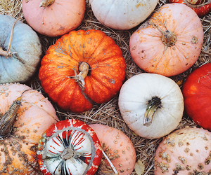 autumn, fall, and gourds image