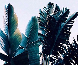beautiful, green, and palms image