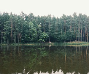calmness, forest, and relax image