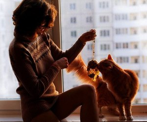 cat, morning, and girl image