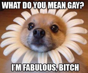 funny, dog, and fabulous image