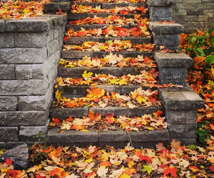 autumn, fall, and fall leaves image