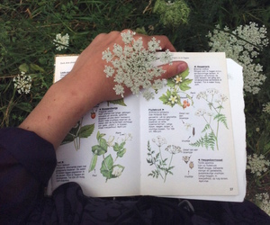 flowers, green, and book image