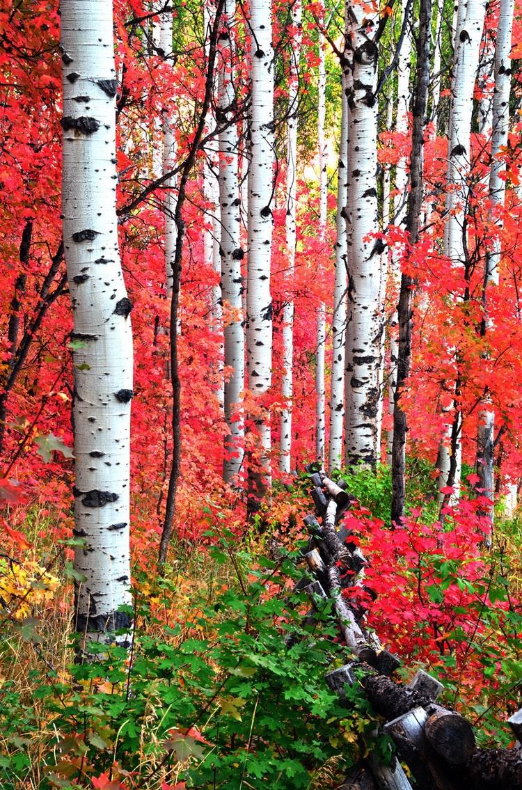 Fall Scenes Wallpaper Uploaded By Siddhi On We Heart It