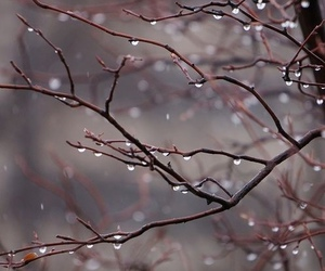 rain, tree, and nature image