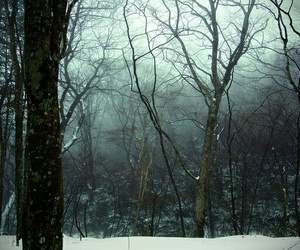 dark, nature, and snow image