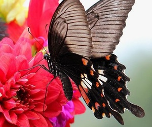 butterfly, delicate, and wings image