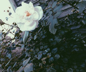 flower, indie, and tumblr image