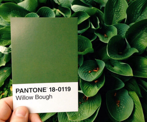 green, aesthetic, and pantone image