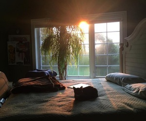 room, cat, and sun image