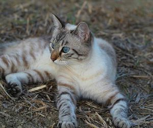 blue eyes, cat, and field image