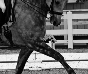 horse, dressage, and beautiful image