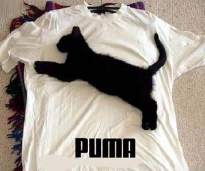 puma, cat, and funny image