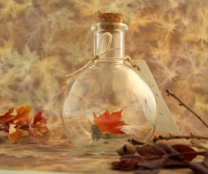autum, vintage, and glass image