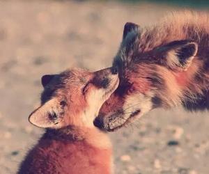 fox, animal, and love image