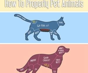 cat, dog, and fish image