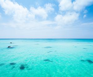ocean, beach, and paradise image