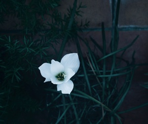 dark, flower, and shadow image