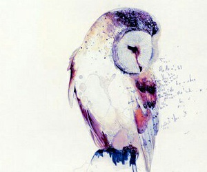 aquarell, art, and owl image