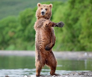 bear, funny, and animal image