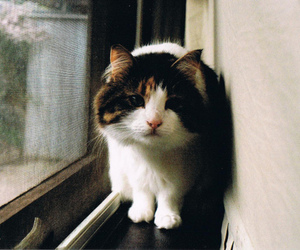 cat, cute, and vintage image