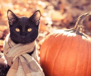 cat, pumpkin, and autumn image