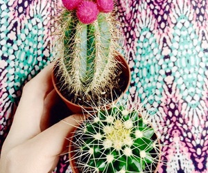 cactus, indie, and tropical image