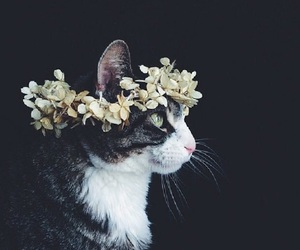 cat, tumblr, and daisies image