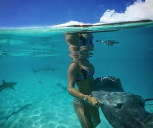 beach, girls, and sharks image