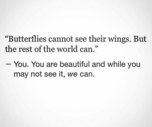 butterfly, beautiful, and wings image