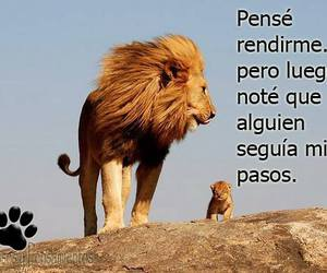 quotes, citas, and frases image