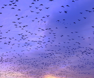 bird, sky, and free image
