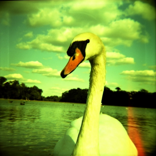 lomo, photography, and Swan image