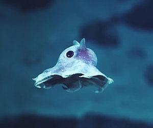 deep sea, dumbo, and octopus image